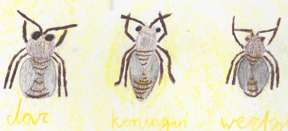 tekening bijen